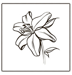 lily flower close-up vector image
