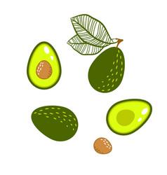 Avocado green isolated vector