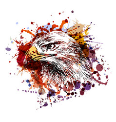 Color of an eagle head vector