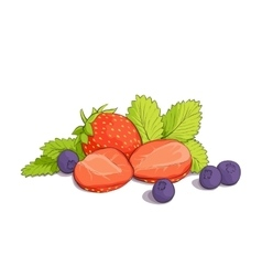 Some strawberries and blueberries vector