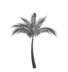 Tropical palm black and white isolated on white vector