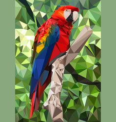 ara parrot low poly vector image