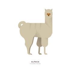 Alpaca wild zoo animal on isolated background vector
