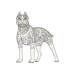 American pit bull terrier coloring book for vector