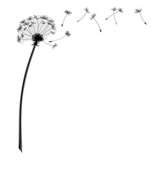 dandelion flower with flying seeds vector image