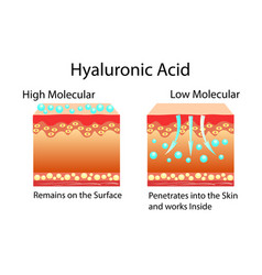 with hyaluronic acid in skin vector image