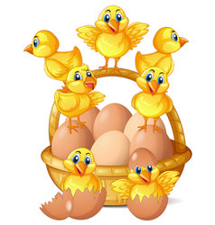 little chicks and eggs in basket vector image vector image
