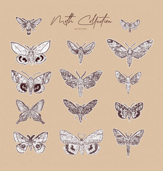 moth collection hand draw sketch vector image