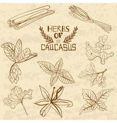Spices Of The Caucasus A collection of vector image