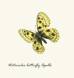 watercolor butterfly parnassius apollo butterfly vector image