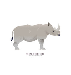white rhino wild animal on isolated background vector image