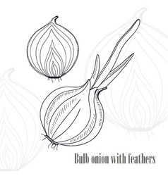 Bulb onion with feathers eco food background vector