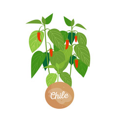 chile and emblem with headline vector image