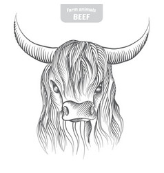 Head pattern cow vector