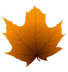 maple leaf isolated on white background vector image