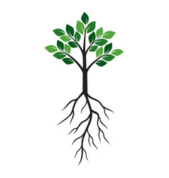 Shape of green tree and roots vector