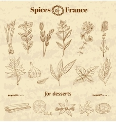 Spice in French cuisine Herbs used in France for vector