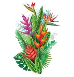 arrangement from tropical plants vector image vector image