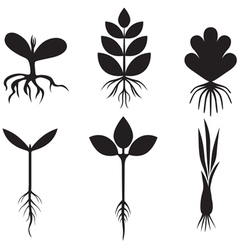 sprout set vector image vector image