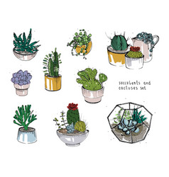 Cactus and succulents set collection plants in vector