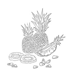 Pineapple in line art style hand drawn vector