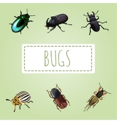 Set of various beetles six image vector