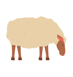 sheep with fluffy wool small young lamb vector image