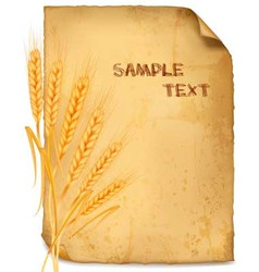 wheat paper vector image vector image