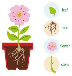 Plant body vector image