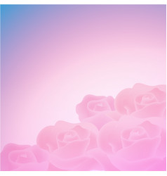 sweet color roses background vector image vector image