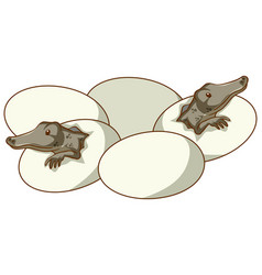 alligators hatching from eggs vector image