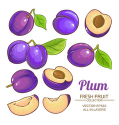 plum fruits set vector image