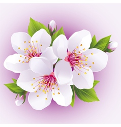 Blossoming sakura branch japanese cherry tree vector image vector image
