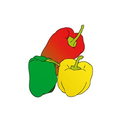 colorful peppers vector image vector image
