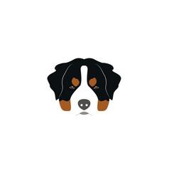 st bernard dog head vector image