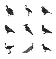 Bird set icons in black style big collection of vector