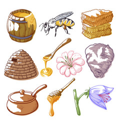 honey and bee sketch vector image