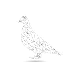 Pigeon vector