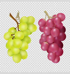 Realistic grapes isolated on transparent vector