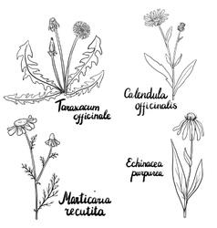 set of medical plants vector image