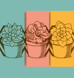 Succulent in pot hand drawing vector