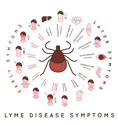Tick disease icons vector