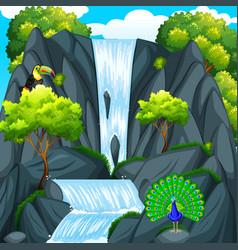 Toucan bird at the waterfall vector