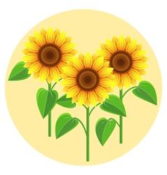 Beautiful flowers sunflowers vector image