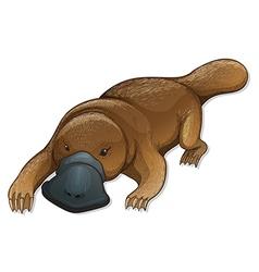 Platypus vector image vector image
