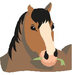 Horse head portrait vector