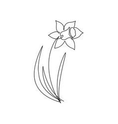 narcissus one line drawing continuous line flower vector image