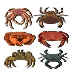 set crab icons vector image