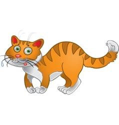 Orange fun cat vector image