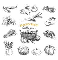 hand drawn sketch Harvest set vector image vector image